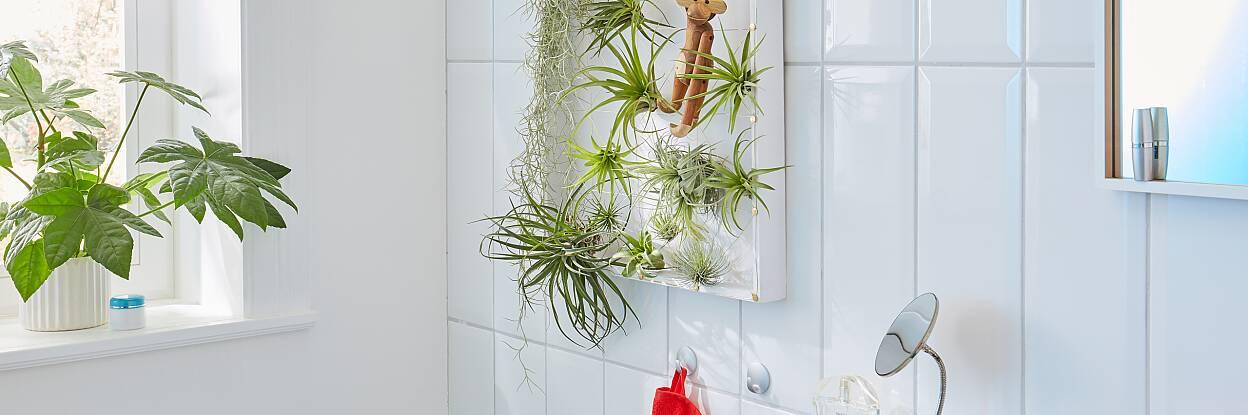 Bringt Pflanzen auf die Höhe: Diese originelle Halterung für exotische und pflegeleichte Tillandsien. Sie besteht aus einem Holztablett und Drähten, die den Pflanzen Halt geben.