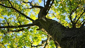wood-nature-leaves-tree1,48113_crop16x9_9