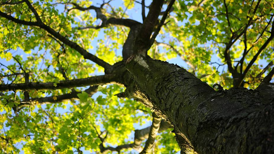 Wood Natur Tree Leaves Responsibility